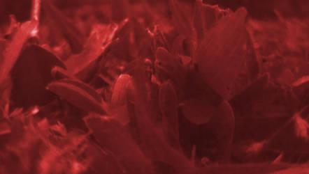 Blood grass by 00Stevo