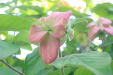 A flower of hope by 00Stevo