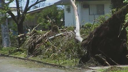 The fallen tree by 00Stevo