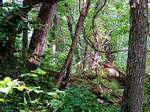 Lakeside Trail Plantlife 03 by TemariAtaje
