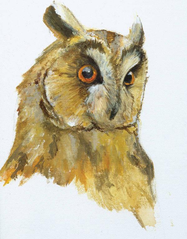 owl_head-study by Kule
