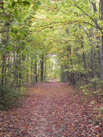 Autumn Walkway 001 by presterjohn1