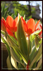 orange color flowers by wistine
