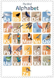 Bird Alphabet poster by Redilion