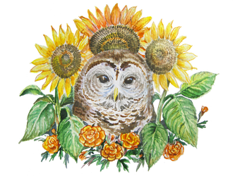 Sunflower owl by Redilion