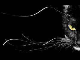 black cat by Black-God-69