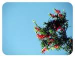 Summer Breeze.1 by vicexversa