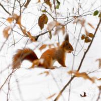 Winter Impression7 by XanaduPhotography