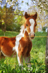 Spring foal by XanaduPhotography
