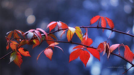 November Bokeh by XanaduPhotography