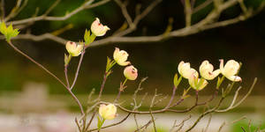 Blossom by XanaduPhotography