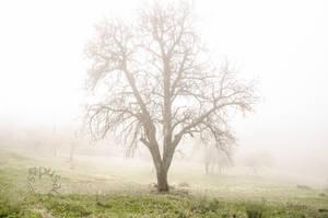 Autumn Mist by XanaduPhotography