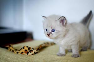 Kitty by XanaduPhotography