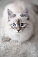 Kitten Grows by XanaduPhotography