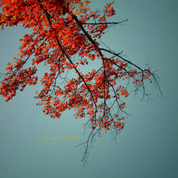 primary colors by Aimelle