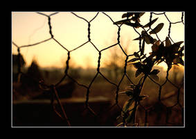 Morning fence 1 by xavierus