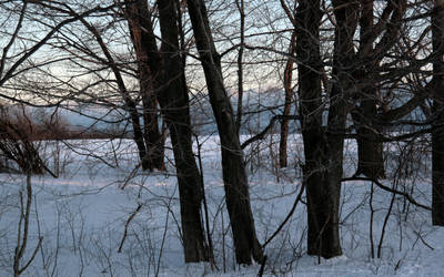 Sunlit Path in Winter Snow by barefootliam