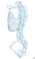 Spine by Liemn