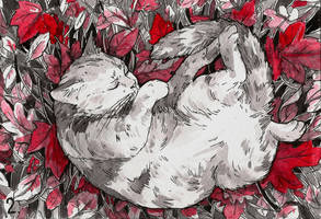 Tranquil cat by Yioshka