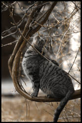 Upward Cat? by ChrisNealPhotography