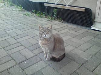 my cat :) by levitan71