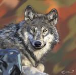 Wolf by Emzebra