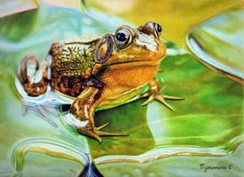 Frog by PutyatinaEkaterina
