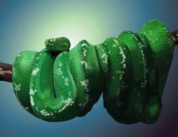 Green Python by OlgaAndreyeva