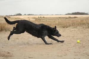 Dog stock 10 by Bundy-Stock