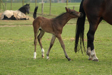 Foal stock 44 by Bundy-Stock