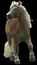 Haflinger TR stock 1 by Bundy-Stock