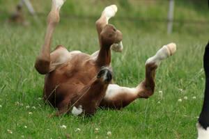 Foal stock 97 by Bundy-Stock