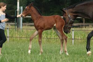 Foal stock 111 by Bundy-Stock