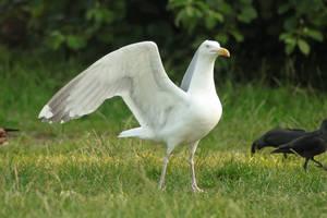 Bird stock 29 by Bundy-Stock