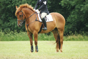 Eventing Horse Show Stock 14 by almondjoyy5