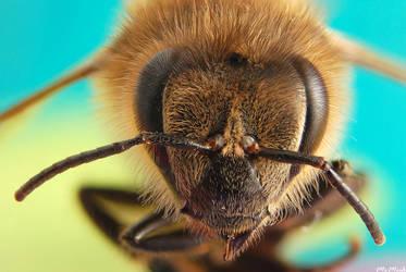 Bee Macro by MrMeik