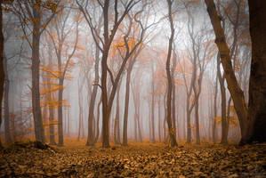 misty autumn by Suvelis