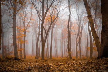 misty autumn by Suvelis