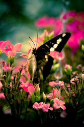 Butterfly wonderland by Ex1Lee