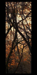 Foggy sunset on the forest by Tom-Mosack
