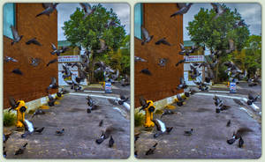 Toronto pigeons 3-D by zour