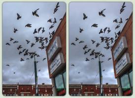 Spadina Avenue doves 3-D / CrossView / Stereoscopy by zour