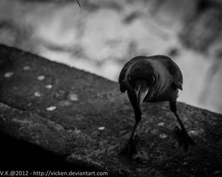 Crow IV by vicken