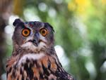 Eurasian Eagle-Owl by rainylake
