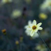 Flower Squares by rainylake
