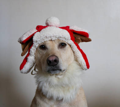 Christmas Pup by rainylake