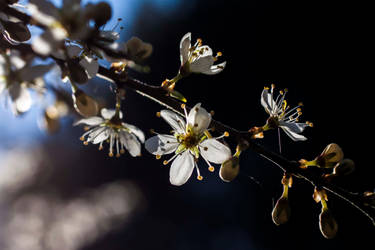 April blossom by Elssa