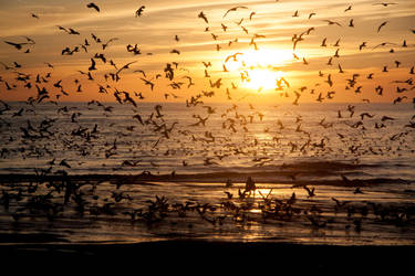 Flock of Seagulls by Elssa