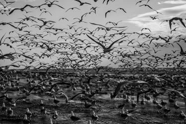 Flock of Seagulls II by Elssa