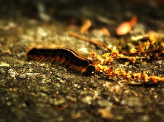 Fuzzy Caterpillar by ScottEquus91